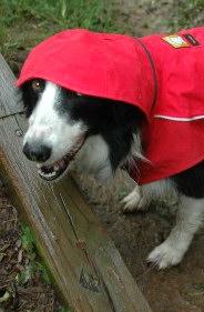 Wolkenradar-weerbericht-hondenweer